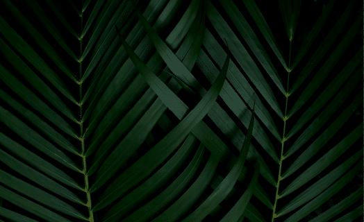 https://botanik.com.mx/wp-content/uploads/2020/03/inner_01_02.png